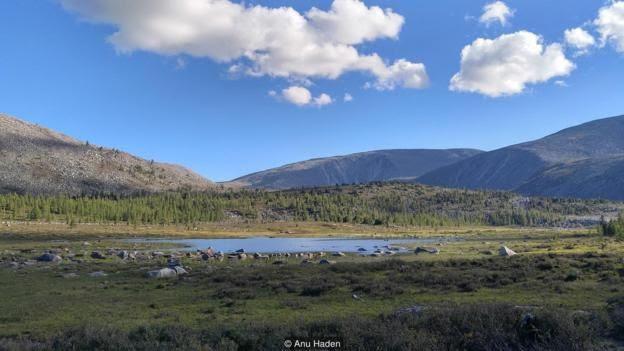 Hệ sinh thái taiga được bao phủ bởi cây thông là một lợi ích cho việc sống dọc biên giới biệt lập ở phía bắc Mông Cổ.