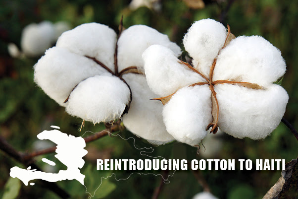 NEW FEASIBILITY STUDY SPONSORED BY TIMBERLAND MAKES COMPELLING CASE FOR BRINGING COTTON FARMING BACK TO HAITI