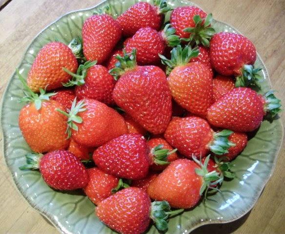 Tunnel grown strawberries Albion, Gento & Christine - 24.5.15