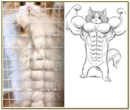 fighter cat framed.JPG