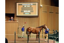 The Into Mischief colt consigned as Hip 1614 in the ring at the Keeneland September Sale