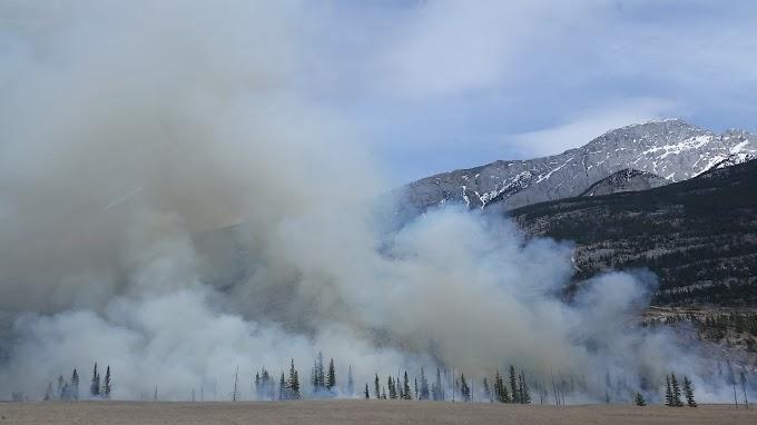 Por meio de tecnologia inédita empresa prevê incêndios florestais com até uma semana de antecedência.