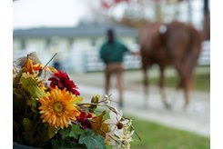 A horse walks on the grounds at the Keeneland November Sale