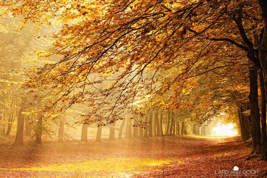 Woodlands in the Netherlands