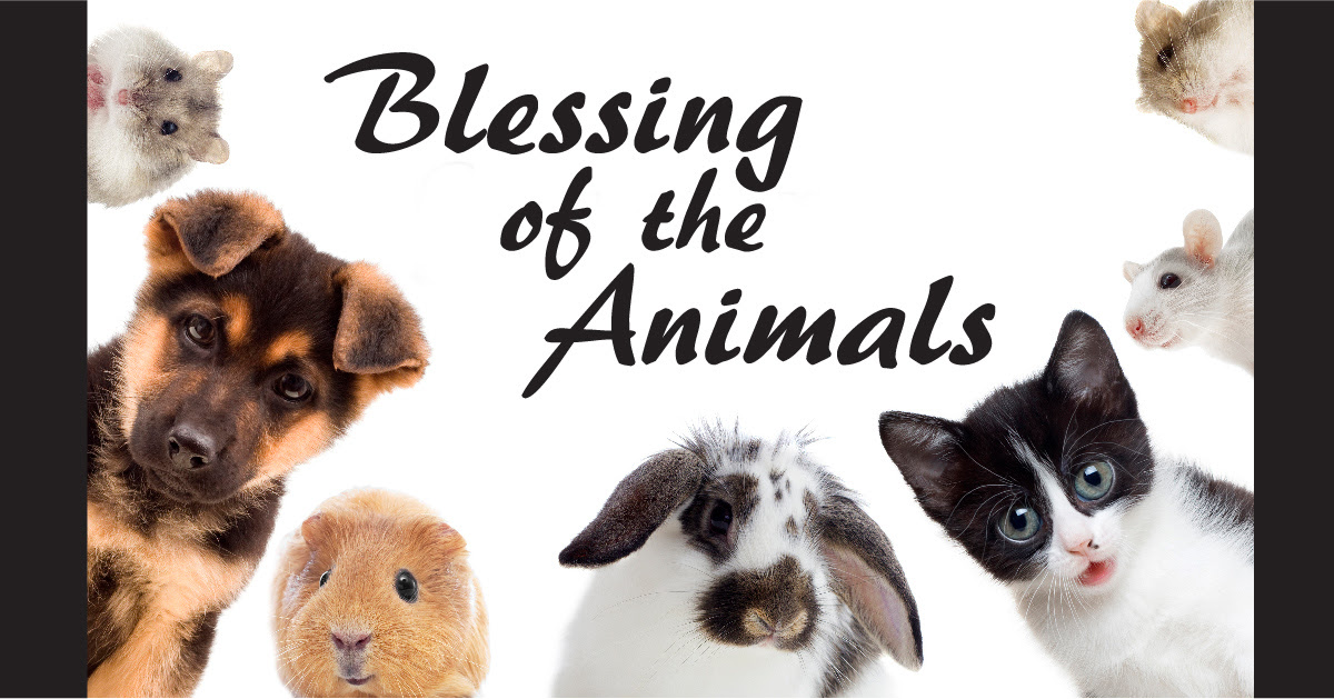 Image result for animal blessing