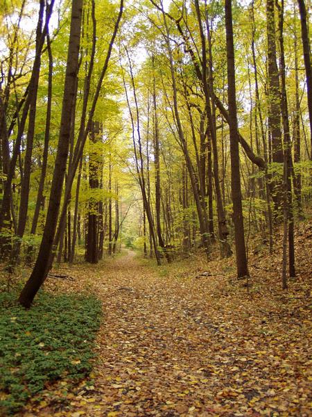 Greenbrook in fall photo by Ken Habermann