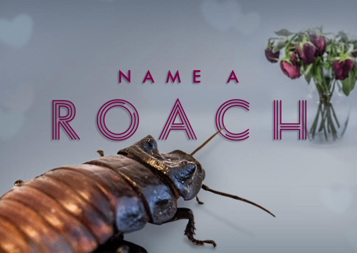 Last chance to name a roach