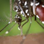 mosquito-1301764_960_720