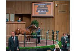 The Quality Road colt consigned as Hip 286 in the ring at the Keeneland September Sale