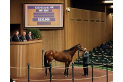 Lady Suebee in the ring at the Keeneland November Sale