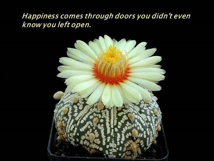 positive side flowers
