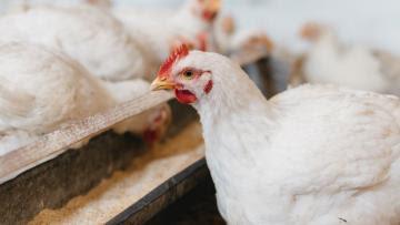 ProAct 360: nueva proteasa que promueve la producción animal sostenible