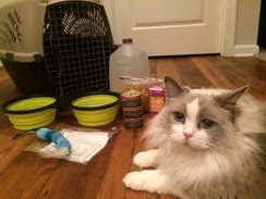 Cat with an Emergency Kit
