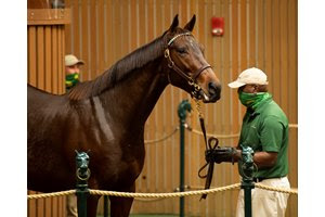 Style and Grace was one of 11 broodmares purchased by Dorman's Determined Stud at the Keeneland November Sale