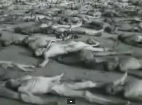 Male                             emaciated dead bodies without clothes and                             without spots and without tattooed numbers                             of detainees (4min. 54sec.)