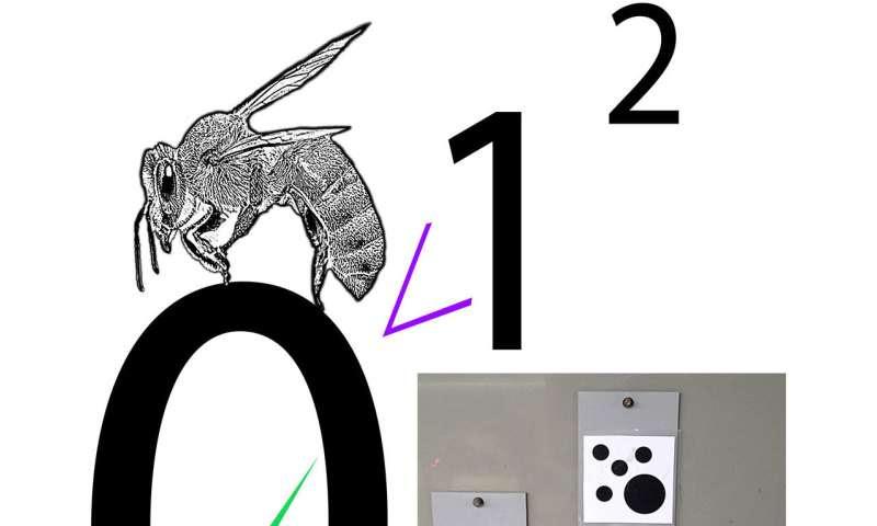 Las abejas se centran en la nada