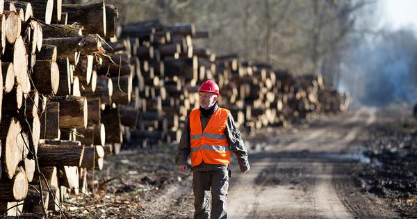Investissements forestiers: le dispositif d'encouragement fiscal prorogé