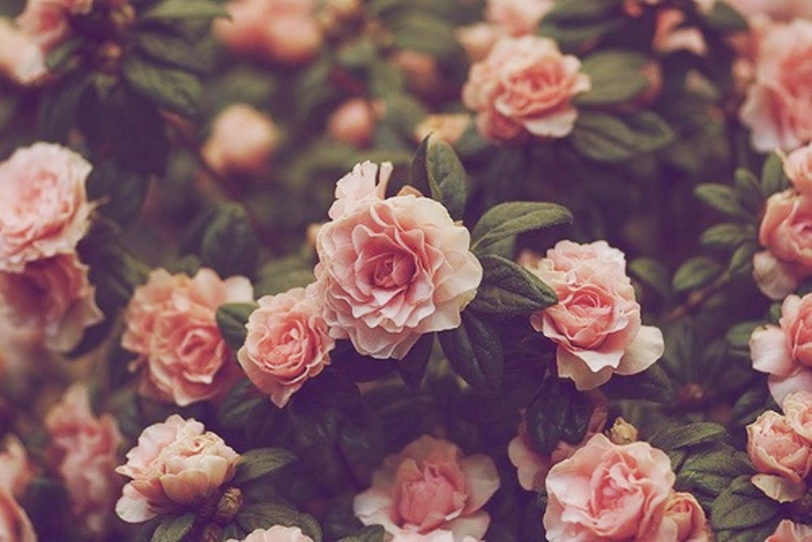 tumblr-flower-wallpaper-24