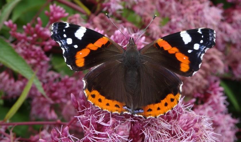 """Afbeeldingsresultaat voor afbeelding vlinders en libellen"""""""