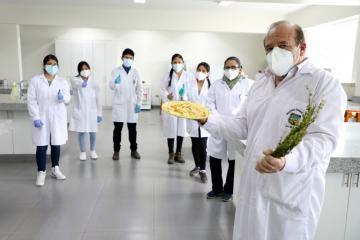 Investigadores de la UNALM emplean plantas originarias para elaborar papas fritas saludables
