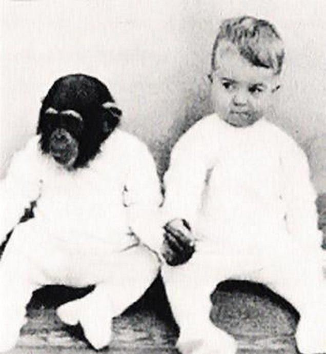 experimentos con simios
