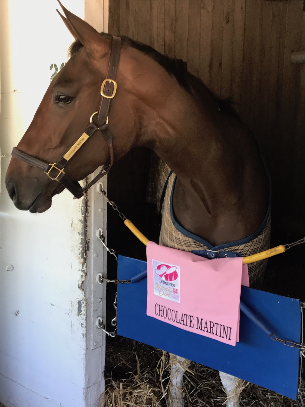 CM with Kentucky Oaks saddle towel