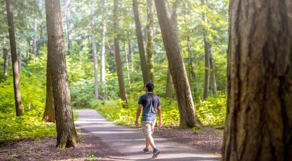 A man walking down a path in a green forest
