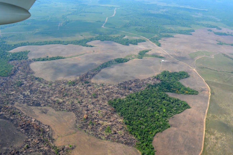 deforestacion-medio-ambiente-arboles-colombia-rodrigo-botero-1170x780