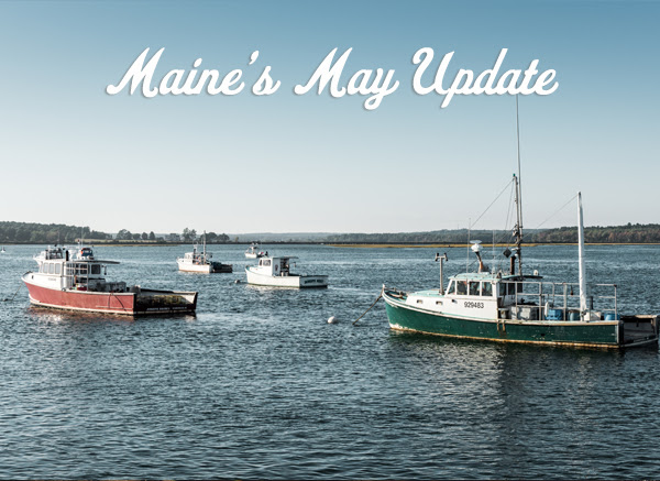 Maine harbor view