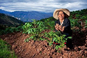 Midagri invertirá S/ 71.1 millones para pastos cultivados y Planes de Negocio
