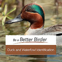 Duck and waterfowl ID course