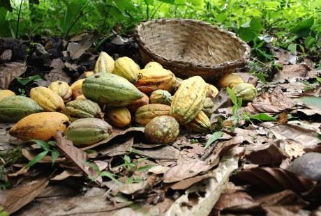 Imagen de una cesta y cacao en la película 'Belén', de Adriana Vila