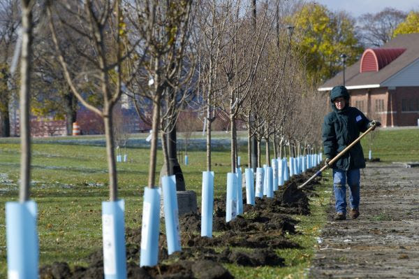 A women walks with a shovel next to a row of newly planted trees
