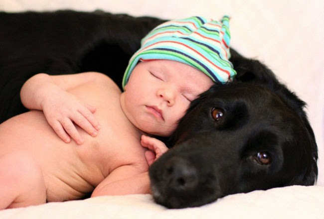 http://s.fishki.net/upload/post/201412/02/1339454/10379110-r3l8t8d-650-small-babies-children-big-dogs-301__880.jpg