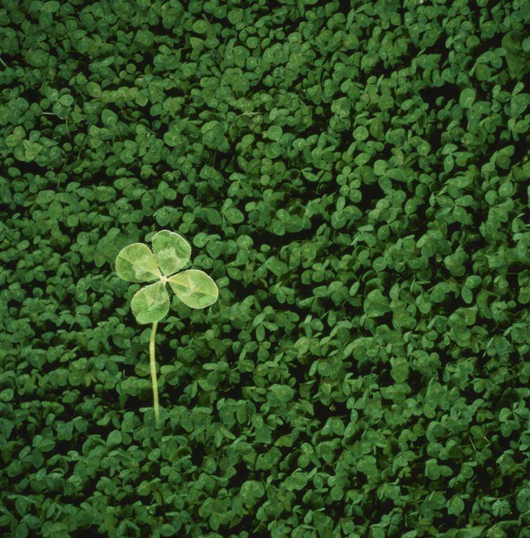 Single Four Leaf Clover