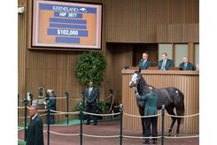 Stormy's Song in the ring at the Keeneland November Breeding Sale