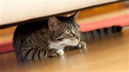 cat anxiety treatment