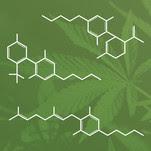 cannabinoids marijuana