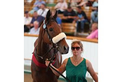 Mr Diamond was the second session's co-top price at 100,000 guineas during the Tattersalls July Sale