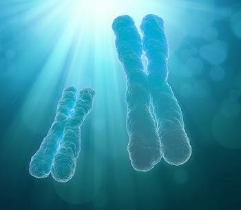 La  transferencia mitocondrial debe ser evaluada en profundidad antes de ser utilizada en la clínica humana se proponen 3 estudios que parecen  ineludibles