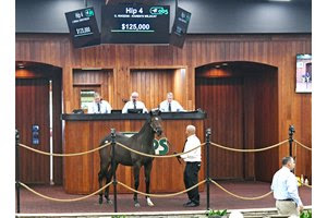 The Khozan colt consigned as Hip 4 in the ring at the OBS October Sale