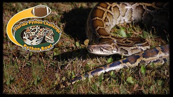 Python Bowl 2