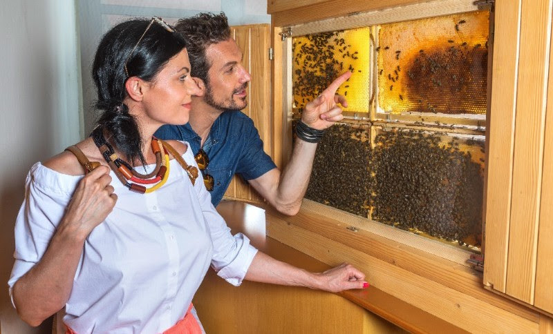 Ponudba čebelarskega turizma v Radol'ci
