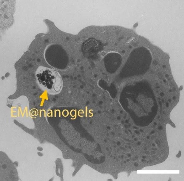 Un neutrobot visto con microscopio electronic,