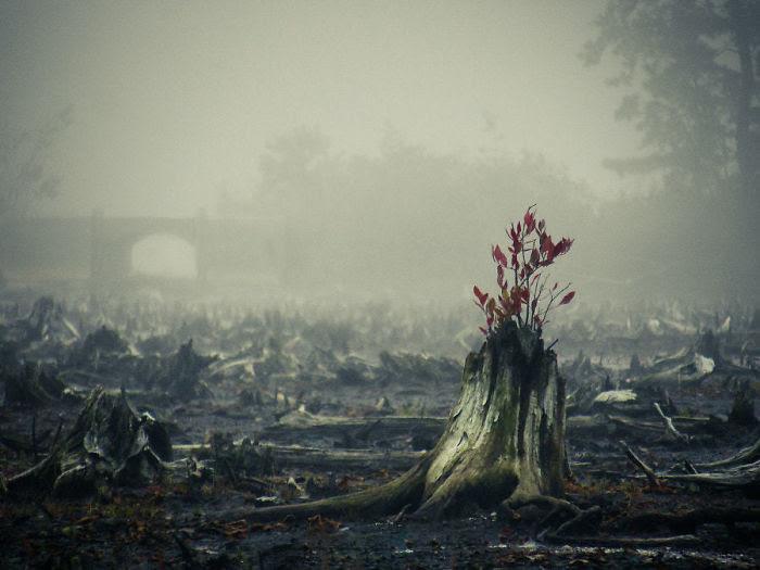 Жажда жизни дерево, живучесть, жизнь, мир, планета, растительность, фото