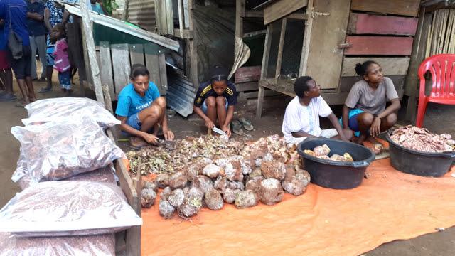 Warga Kampung Yanggandur mengiris sarang semut bakal obat herbal di Merauke. Foto: Hidayatillah