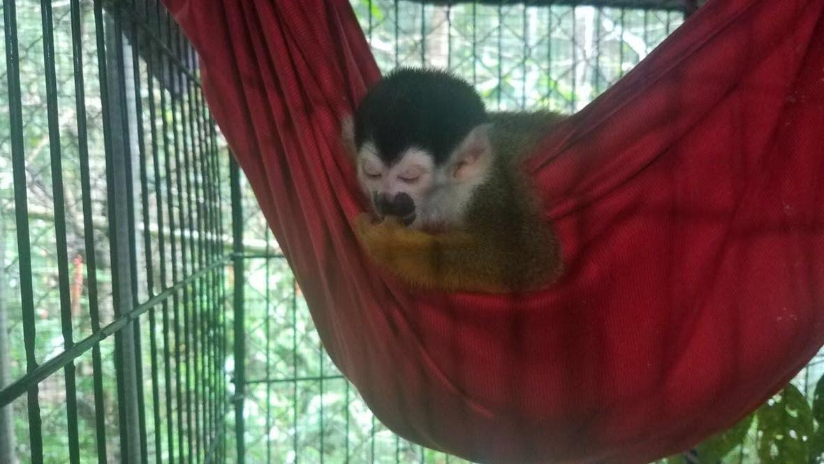 Peachie asleep in her hammock