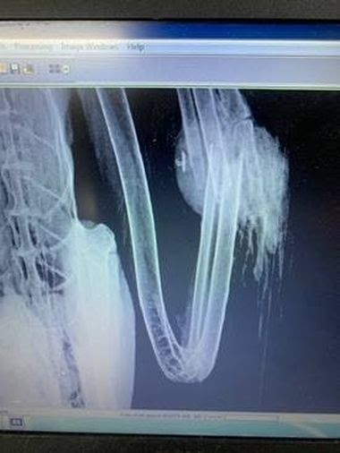 photo of x-ray of bird wing