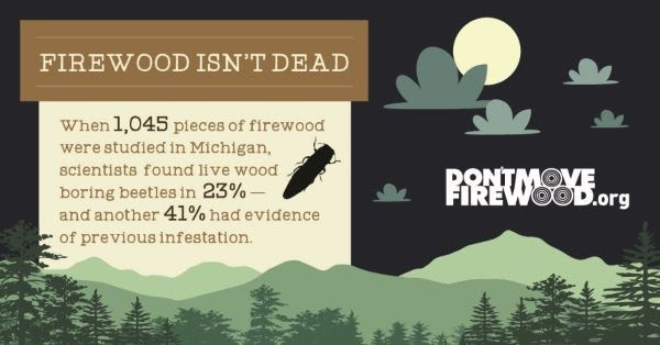 A Michigan study showed that when 1,045 pieces of firewood were examined, 23% had evidence of beetles, and 41% of infestation
