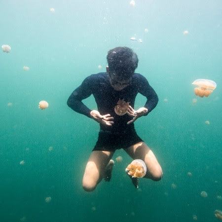 A man in the sea surrounded by jellyfish